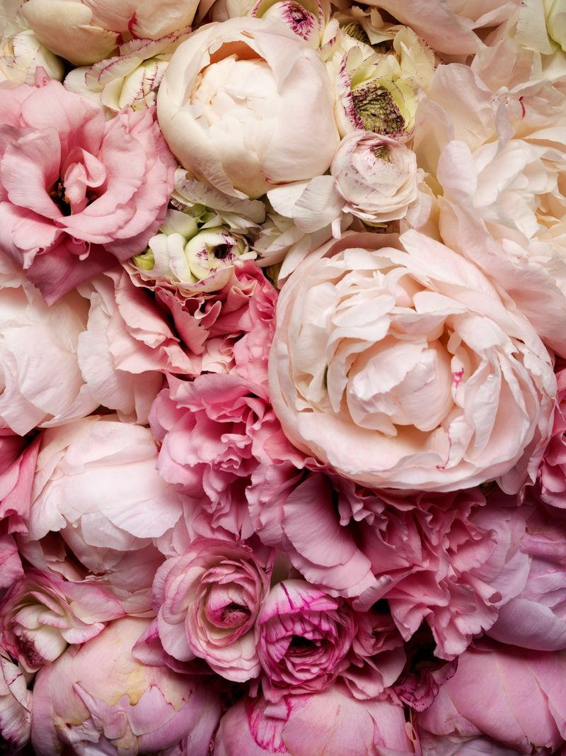 Peonies-must-use