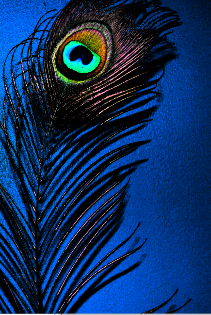 Peacock-blue.png?w=435&h=650