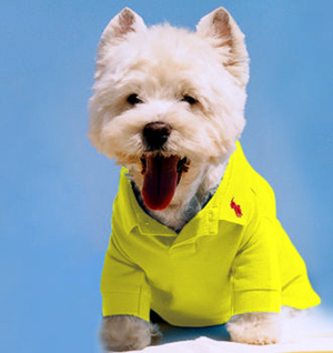 Ralph Lauren Polo shirt for dogs