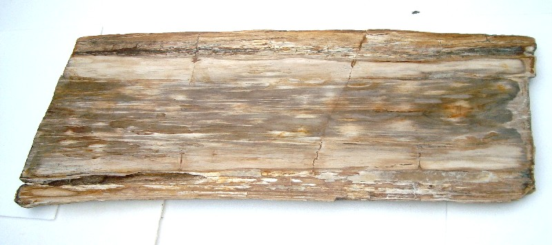 Petrified wood slab s