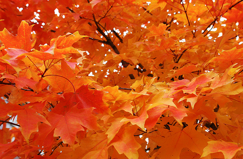 Orange-fall-leaves