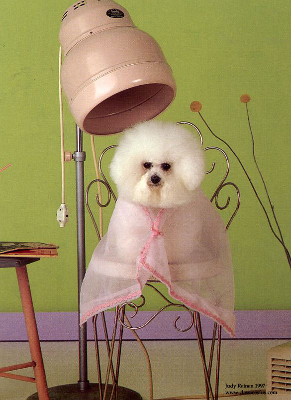 Dog-grooming-poodle