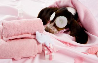 Dog-spa-article